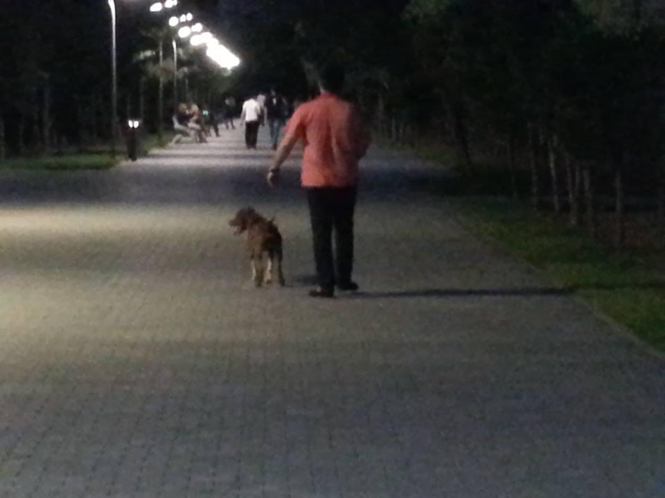 """Sumqayıtın park və xiyabanlarında """"sahibi olan"""" TƏHLÜKƏ (FOTO)"""