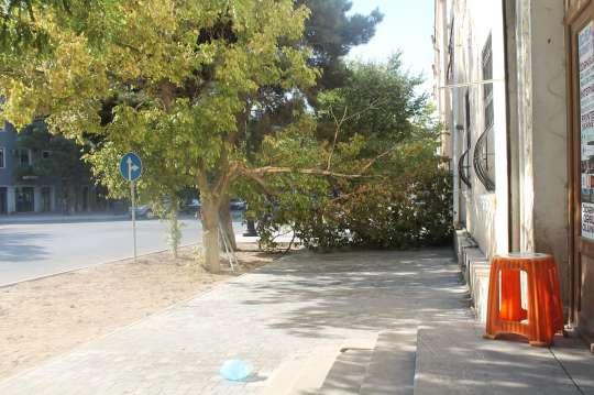 Sumqayıtda yaşayış binasının qarşısında ağac aşaraq yolu kəsdi - FOTOLAR